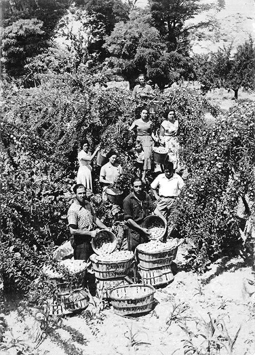 Los primeros tiempos del negocio familiar de Lazaya: cultivo de frutales y recolección de fruta para hacer dulces de fruta confitada y otras frutas en conserva por parte de terceros.