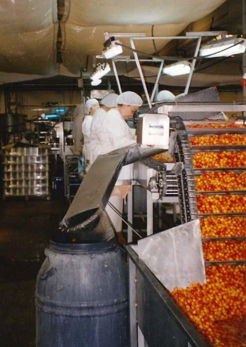 Selección de cerezas para hacer dulces de fruta confitada en las instalaciones de Lazaya. Años 80.