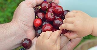 Frutas en conserva con el máximo respeto por medio ambiente y la seguridad alimentaria.