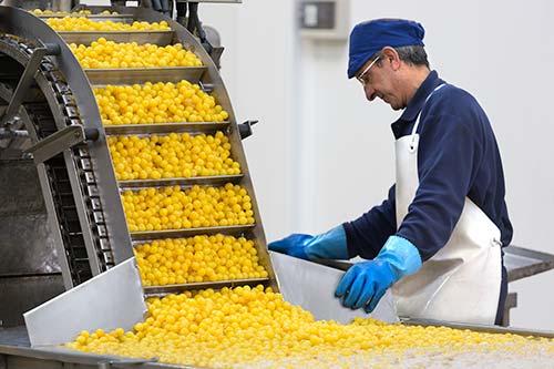 Modernos métodos para la producción de la fruta confitada Lazaya, pero siempre bajo la atenta mirada de los operarios, como garantía de calidad.