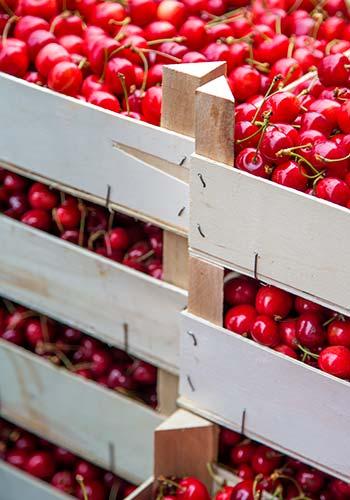 Fruta confitada Lazaya, hecha a partir de las cerezas de sus propias plantaciones.