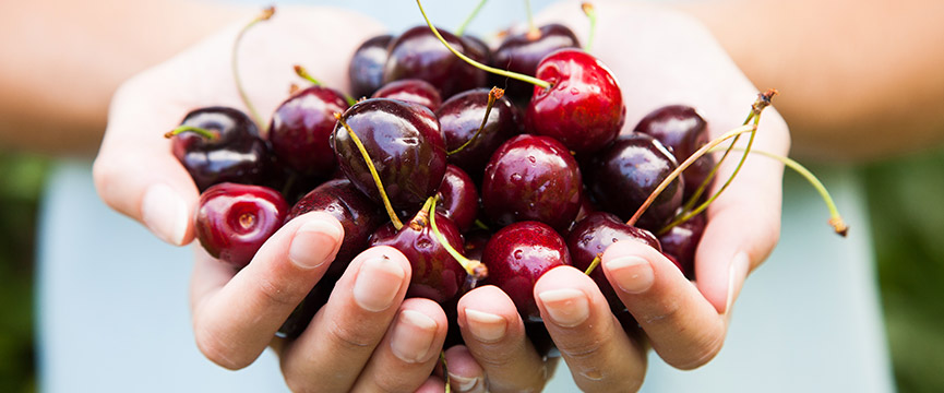 different culinary uses of Morello and sweet cherries