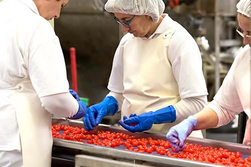 Women workers sorting out glace cherries in the candied fruits lines of the factory.